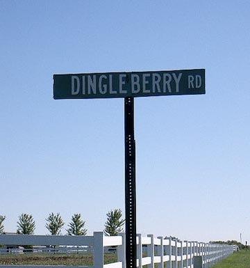 dingle-berry.jpg