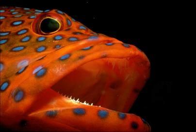 g-hlt-090225-grouper-ciguatera-10a.hmedium.jpg.jpeg